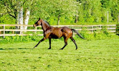 horse essay contest