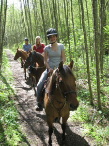 Consistency is an important trait of a good trail horse. Ride them more than once, in different situations, before purchasing.