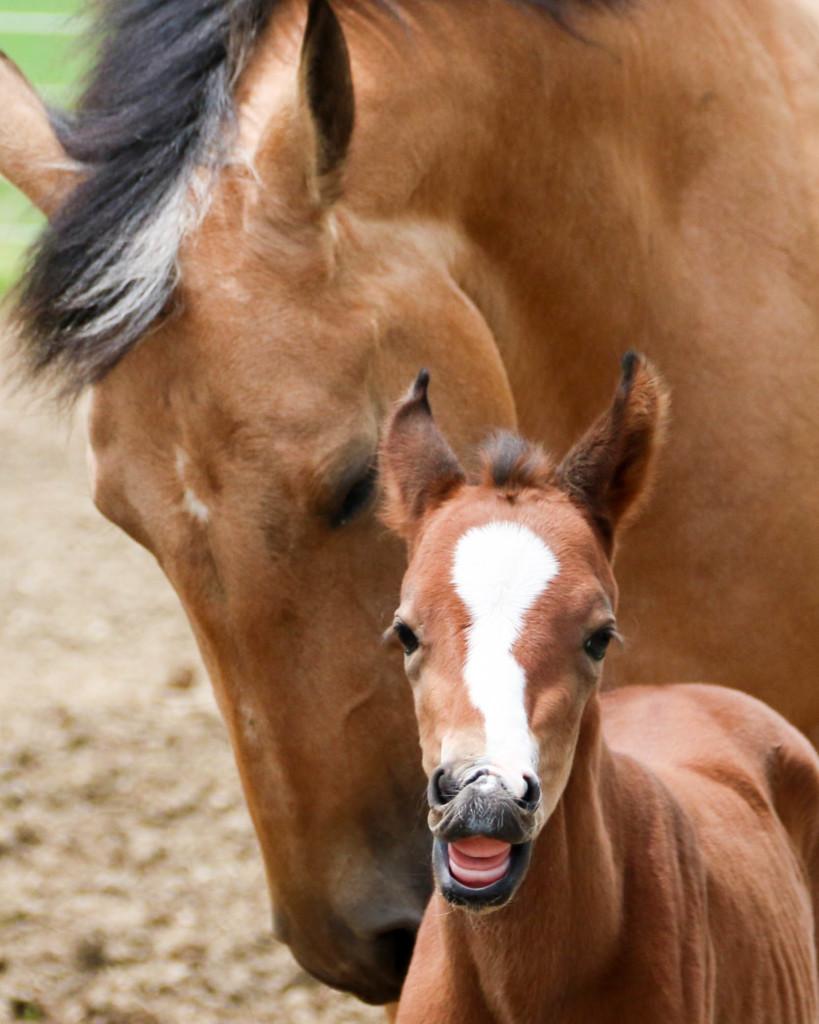 Dangelo Foal