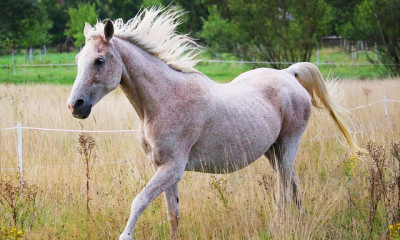 The Healthy Older Horse