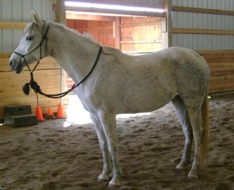 missy-wryn-horse-afraid hegemony