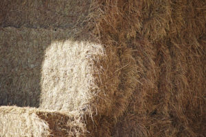A good quality hay can help keep a horse healthy, while poor quality hay can be detrimental. Image courtesy Purina.