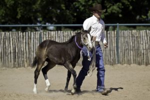 foal training tips from Clinton Anderson Downunder Horsemanship