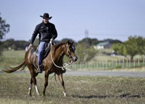 Horseman Clinton Anderson explains From Colt Starting to Well-Trained Horse