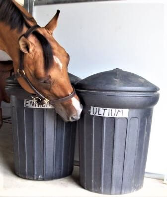 Online Exclusive: Storing Horse Feed