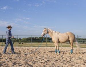 Clinton Anderson Downunder Horsemanship Lesson