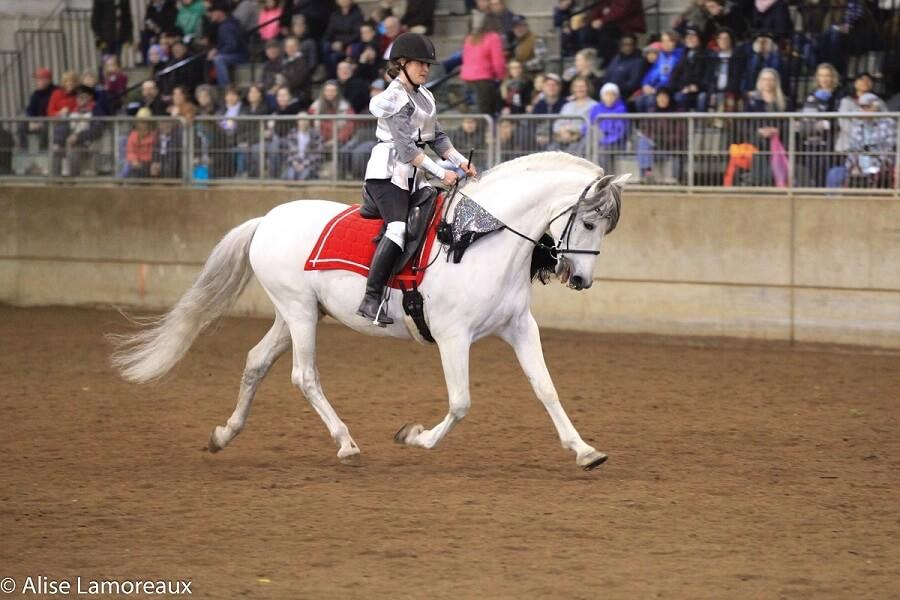Northwest Horse Fair & Expo 2020